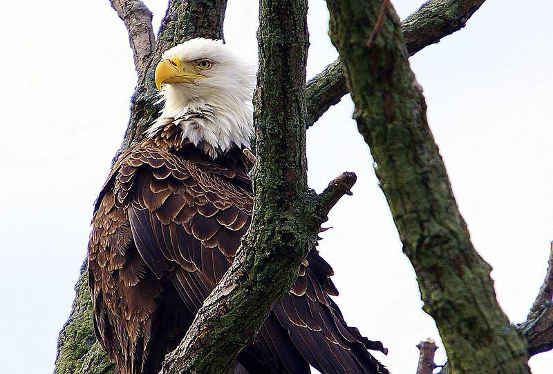 Eagle Shots