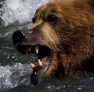 Alaska  - Did you say bears?