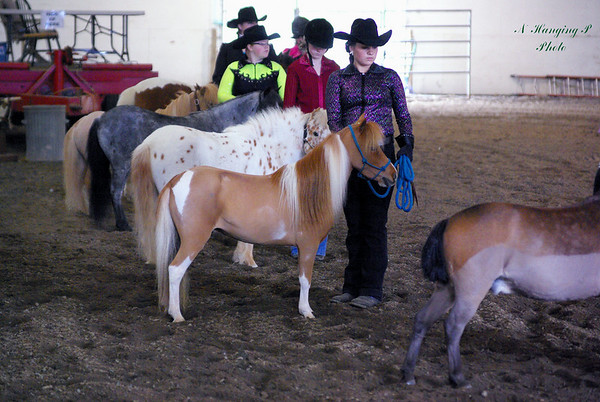 Spring 4-H Shows 2010