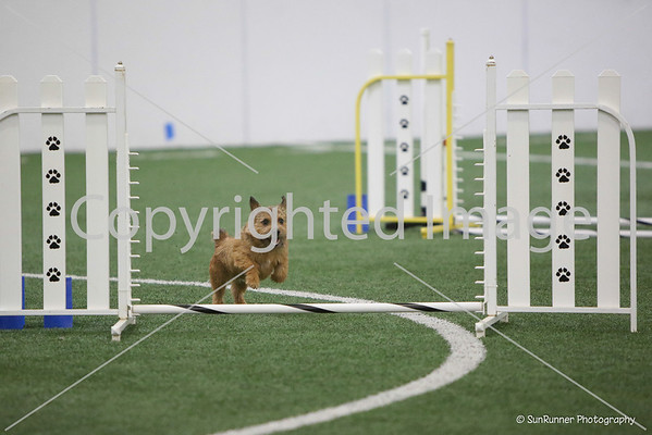 AKC July 14 Open Standard