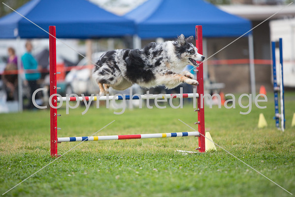 PASA Agility March 2014