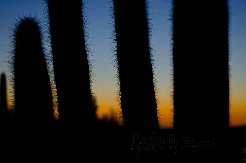 Moonscape photography at the Desert Botanical Gardens.  A fantastic class - beautiful evening!