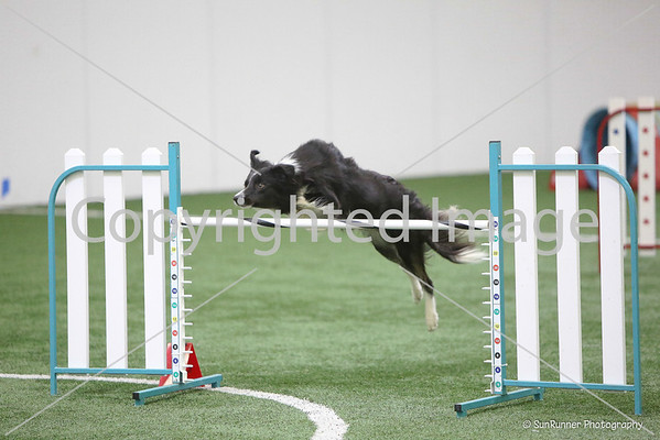 AKC Novice Jumpers Sat. July 13