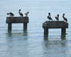 Six Pelicans, Key West