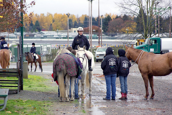 Fall Horse Shows