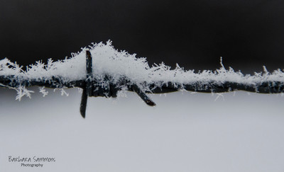 Barbed wire with snow - 02/26/15