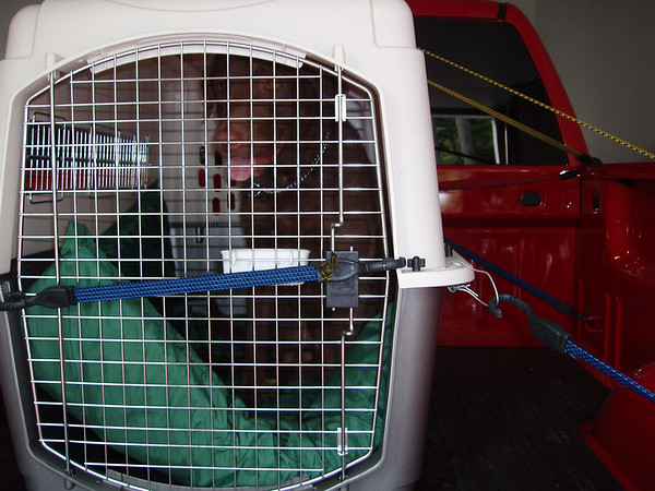 My favorite way to travel!  Silly Momma's afraid my crate will fall out I guess!