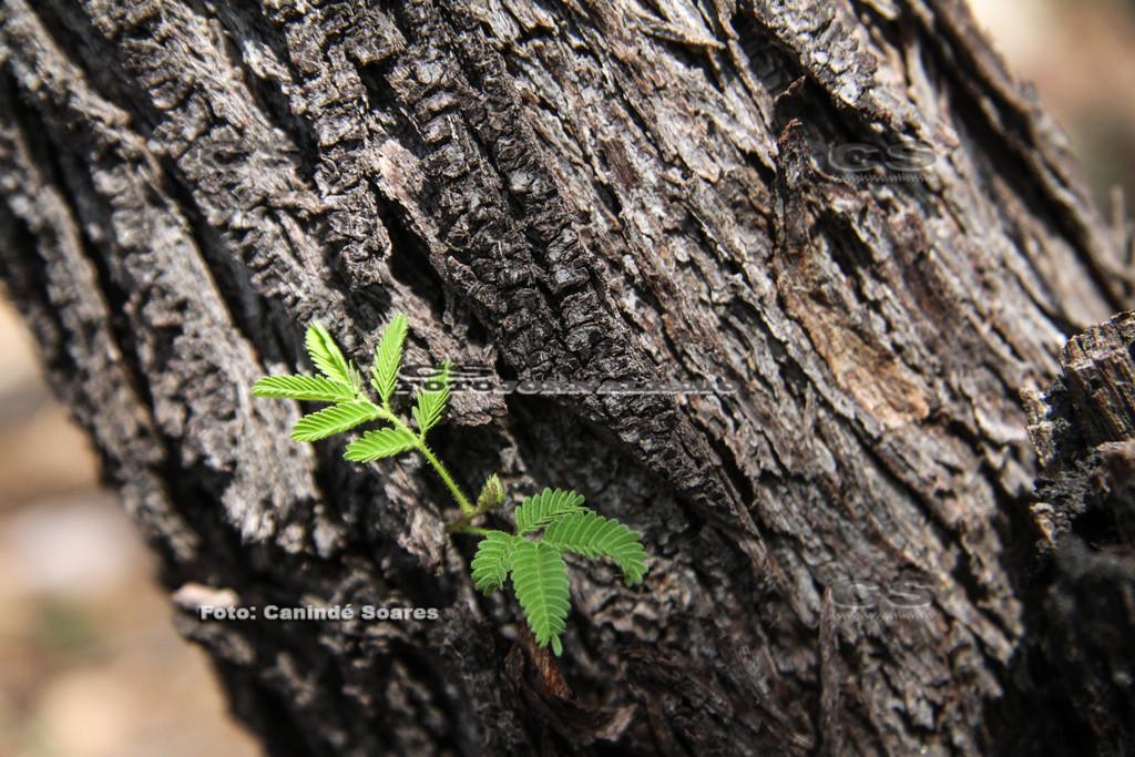 Folhas no tronco de árvore