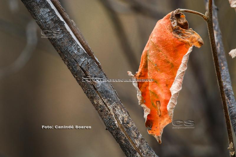 Folha seca e caule de árvore