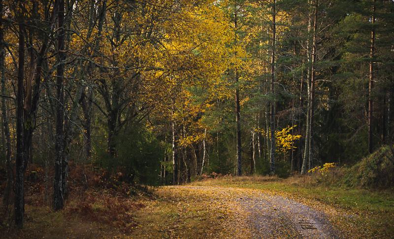 Fallen Leaves, Fallen Leaves, Fallen Leaves