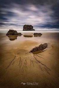 Roots of sand, Playa de la Ballota, Llanes, Asturias