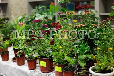 2017оны арваннэгдүгээр сарын 10. Цэцэгсийн хүрээлэн тасалгааны цэцгийн үзэсгэлэн худалдаа.ГЭРЭЛ ЗУРГИЙГ Г.БАЗАРРАГЧАА /МРА