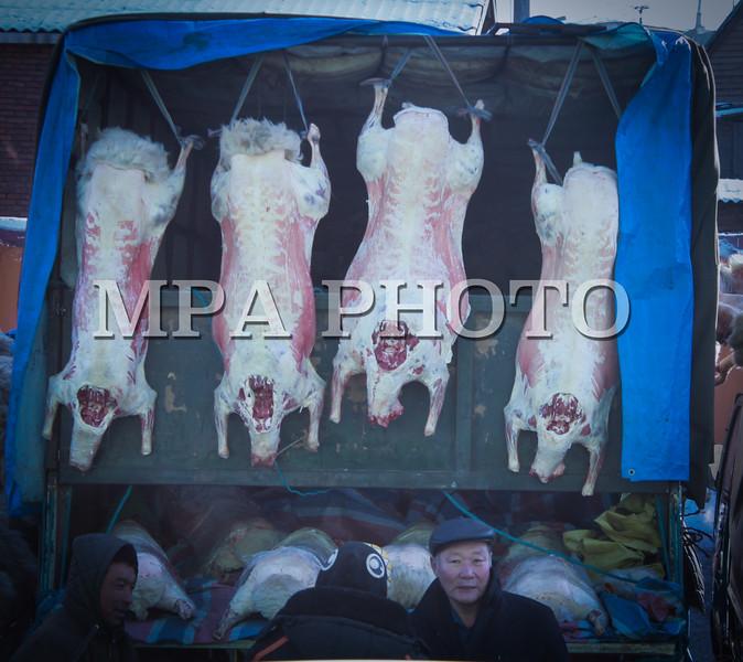 """Монгол улс 2014 он нэгдүгээр сарын 6 """"Хүчит шонхор"""" зах дээр ууцны мах дунджаар 150-220 мянган төгрөгийн үнэтэй байна. Том сүүлтэй, 40 гаруй килограмм жинтэй тарган ууцны мах 220 мянган төгрөг, арай дундаж нь 180 мянган төгрөг, жижиг нь 120-150 мянган төгрөгийн үнэтэй байна. ГЭРЭЛ ЗУРГИЙГ Г.ӨНӨБОЛД"""