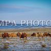 Монгол Улс, Говь-Алтай аймгийн Дэлгэр  сум. Дэлгэрийн тал. 2014 оны 1 дүгээр сарын 18.  MPA PHOTO/ Д.ТҮВШИНЖАРГАЛ