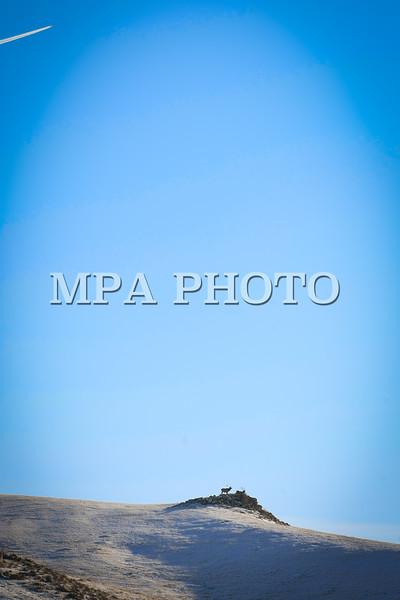 Монгол Улс, Төв аймаг. 2014 оны 1 дүгээр сарын 18. Төв аймгийн Алтанбулаг, Аргалант, Баянхангай сумдын зааг нутагт Улаанбаатараас баруун тийш 80 километрт оршдог. Баруун өмнөөс зүүн хойшоо чиглэлтэй сунаж тогтсон. Дунджаар 1500-1700 метр өндөр. Хамгийн өндөр цэг нь Хөшөөт уул бөгөөд 1842 метр. Хамгийн нам цэг нь 1190 метр өндөр Тариатын булаг. Хэнтийн нурууны баруун өмнөд салбар уул юм. Баян, Эхэн-Ус, Алтганат, Мойлт, Уртын ам, Шувуун ам зэрэг газруудаар 10 гаруй цэнгэг уст горхитой.<br /> Уулын орой, ар шилээр 2080 га талбай бүхий хусан ойтой, 450 шахам төрлийн ургамалтай. Халиун буга, гөрөөс, зэрлэг гахай болон төрөл бүрийн мэрэгч амьтан элбэг байдаг. 126 зүйл шувуутай. Хустайн нурууны бүс нутагт байх Хустайн бааз нь өвөл зунгүй ажилладаг бөгөөд тэнд тахь нутагшуулах төсөл хэрхэн хэрэгжиж байгаа талаар баримтат бичлэг үзүүлж, Хустайн бүс нутгийн талаар мэдээлэл бүхий үзэсгэлэнгийн танхим ажиллуулдаг. Хустайн нурууны энэ бүс нутагт 1992 оноос тахь нутагшуулах Монгол Голландын хамтарсан Тахь төслийг хэрэгжүүлсэн. <br /> Энэ төслийн хүрээнд 900 ам километр  нутгийг 1993 оноос улсын хамгаалалтанд авсан. Анх 1992 онд 15 тахийг Оросоор дамжуулан авчирсан ба түүнээс хойш 3 жил тутам 18-20 тахь нэмж нийт 84 тахь авчирсан нь өсөж үржсээр эдүгээ 250 гаруй тоо толгойд хүрээд байна. Анхны унага нь 1993 онд төрсөн.  Тахийг Монгол адууны дээд өвөг гэж үздэг. XIX зууны эхэнд Оросын эрдэмтэн Н.М.Прежевальский нээсэн бөгөөд Прежевальскийн адуу гэж бүртгэгджээ. 1945 он гэхэд 31 тоо толгой байж байгаад 1960 он гэхэд устаж байхгүй болжээ.<br /> MPA PHOTO/ Б.БЯМБА-ОЧИР