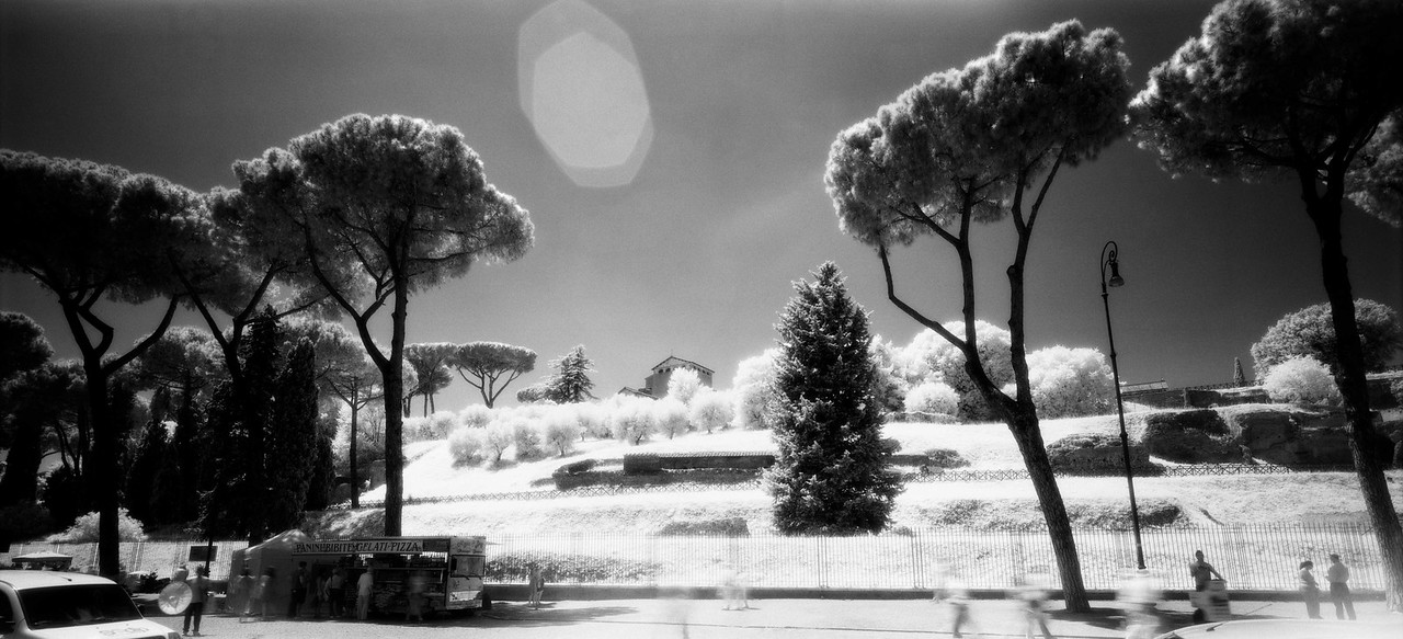 19  Roman trees