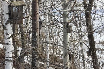 12.04.2017 - Скворечники в лесу (Фото: Александр Эшкинин/ИА Татар-информ)