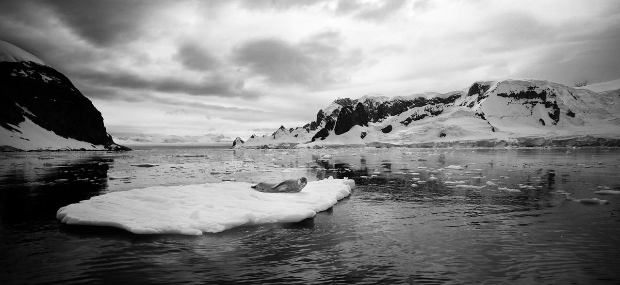 Антарктида №7