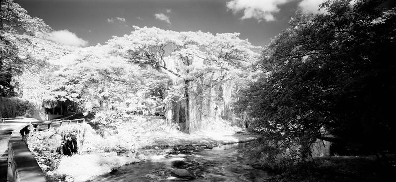 23  Jungles 1