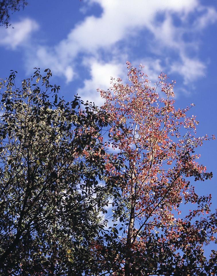 17  Moscow Sokol'niki autumn