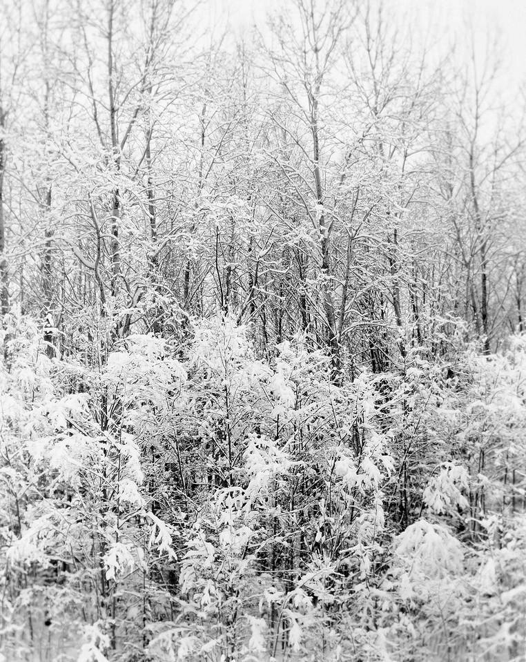3 Soft Snow
