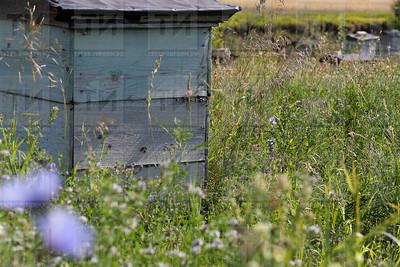 13.08.2018 - Семейная пасека Сабирзяновых в  Тюлячинском районе (фото Салават Камалетдинов)