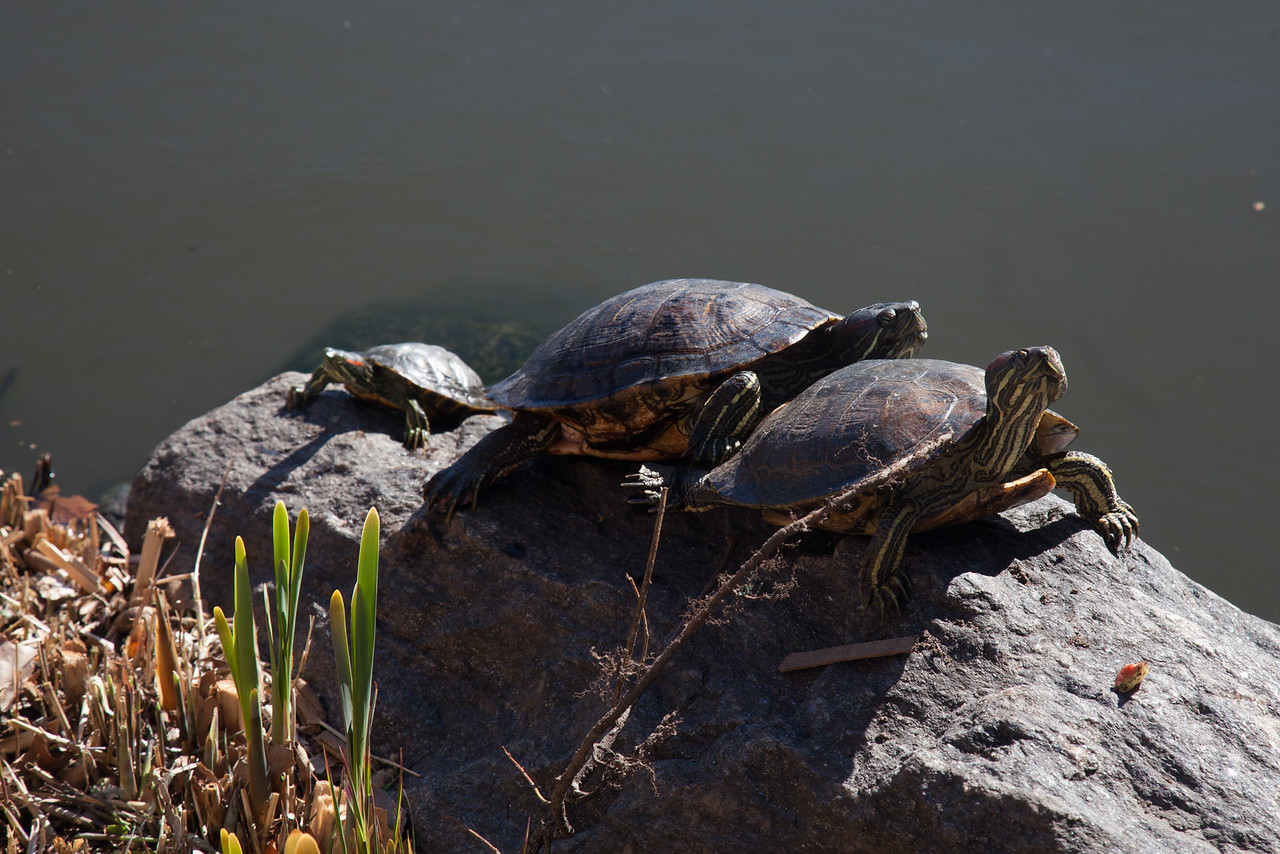 Turtles taking sun baths