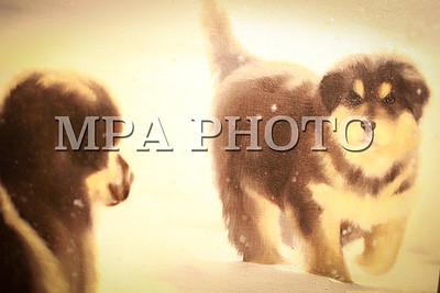 2016 оны наймдугаар сарын 24. Амьтад уран зургийн үзэсгэлэн . ГЭРЭЛ ЗУРГИЙГ Г.ӨНӨБОЛД /МРА