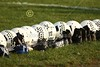 Pregame Warm-Ups - Friday, September 28, 2012 - Whitehall-Yearling Rams at Granville Blue Aces - HOMECOMING