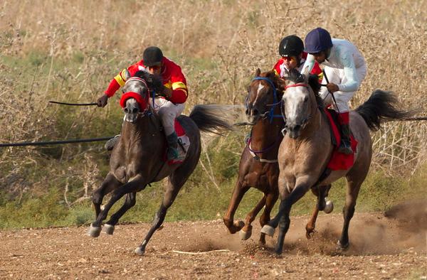 Arabian horses -סוסים ערבים