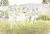0201_NYAB_RLF_2011_09_11