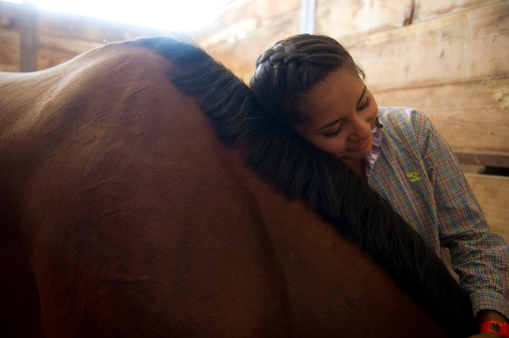. Sierra Silva, 17, of Henderson, Co., leans her head on her five-year-old quarter horse Whiskey Breeze, at the Adam\'s County Fair in Brighton, CO on July 31, 2013. (Photo By Grant Hindsley/The Denver Post)