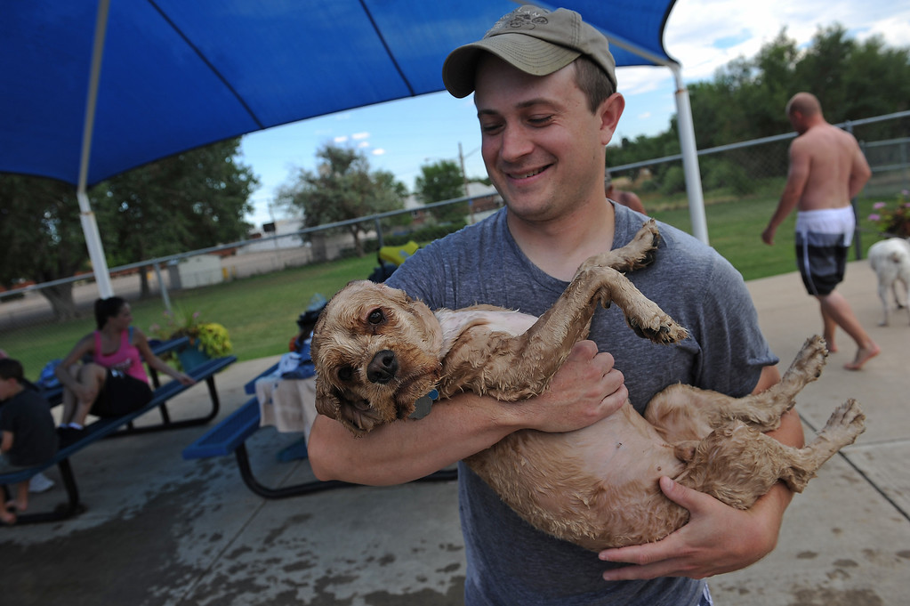 . Despite loving taking showers at home, Hoover, a one year old Cocker spaniel didn\'t seem to like the pool very much as he relaxes in the arms of his owner Zach Levine, of Thornton, n the pool at the Kiwanis Pool in Northglenn, CO on September 2, 2013.  Lucky dogs were invited to swim at Kiwanis Pool in Northglenn, CO on Monday September 2, 2013 before the pool is drained for the summer.  In addition to swimming, dogs enjoyed games, contests, treats and running around off leash with other dogs.  The price of entry was $5 which benefits the pool.  This is the first year Northglenn has offered the pool to the dogs.  Photo by Helen H. Richardson/The Denver Post