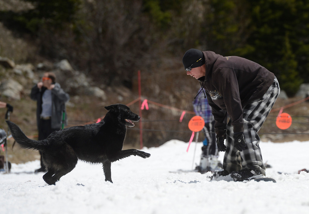 . SUMMIT COUNTY, CO - JUNE 08: Snowboarder, Michael Moore, plays with his dog, �Lizzie Girl� at the base of the Arapahoe Basin ski area in Summit County Colorado, Saturday morning, June 08, 2013. The ski area will close for the season at the end of the day, Sunday June 09, 2013.  (Photo By Andy Cross/The Denver Post)