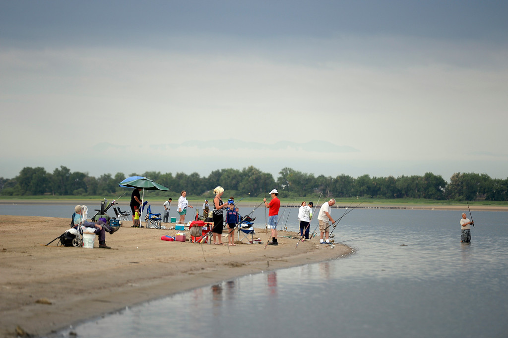 . Anglers line the shores to get in some fishing at Barr Lake during the public fish salvage on September 1, 2013. The draught conditions on the eastern plains are causing farmers to call on the water stored in Barr Lake. Good news for anglers with an appetite: As the water is drawn down to about a quarter of what\'s normally stored there, anglers can fish without limits with a license. (Photo by John Leyba/The Denver Post)