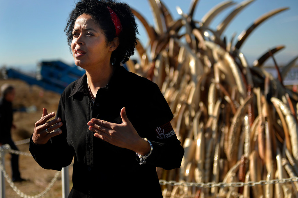 . Paula Kahumbu, executive director of the Kenya Land Conservation Trust and WildlifeDirect, speaking before the US Fish and Wildlife, at the direction of President Obama, crushed tons of ivory at the Rocky Mountain Arsenal Wildlife Refuge in effort to stymie the illegal taking of wildlife November 14, 2013 Commerce City, CO. (Photo By Joe Amon/The Denver Post)