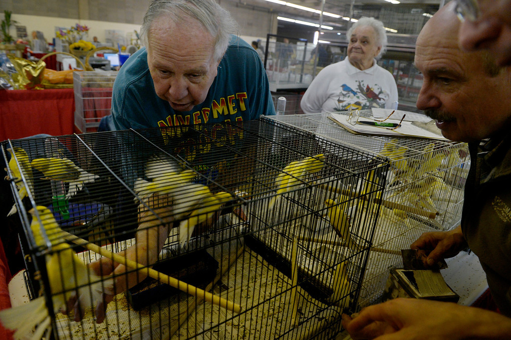. DENVER, CO. - NOVEMBER 16: Lloyd Marquardt, left, catches a canary for a customer  during the Rocky Mountain Bird expo at the National Western Complex in Denver, CO November 16, 2013. He and his wife, Joan, center, are retiring from their 40 years in the bird business and hope to sell their remaining 71 canaries.  (Photo By Craig F. Walker / The Denver Post)