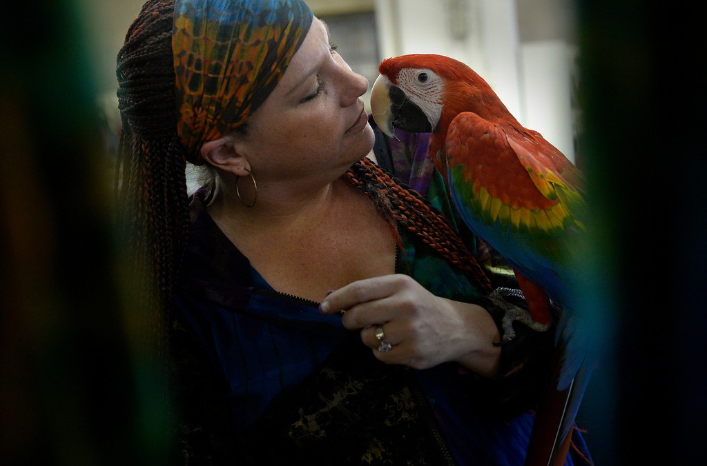 . DENVER, CO. - NOVEMBER 16:  Lauren Gunhus displays, Zubi, a Ruby Macaw, during the Rocky Mountain Bird expo at the National Western Complex in Denver, CO November 16, 2013.(Photo By Craig F. Walker / The Denver Post)