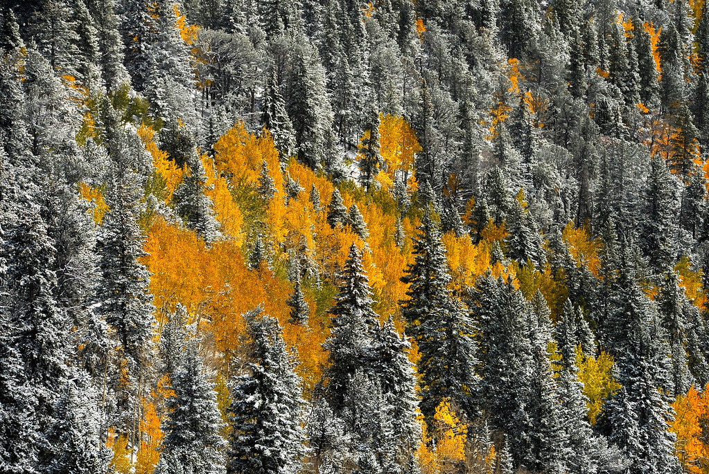 . IDAHO SPRINGS, CO - OCTOBER 04: The two seasons, fall and winter, collide as a snow storm moves into the Colorado mountains near Idaho Springs, October 04, 2013. The mountain could see up to a foot of snow from the storm. (Photo By RJ Sangosti/The Denver Post)