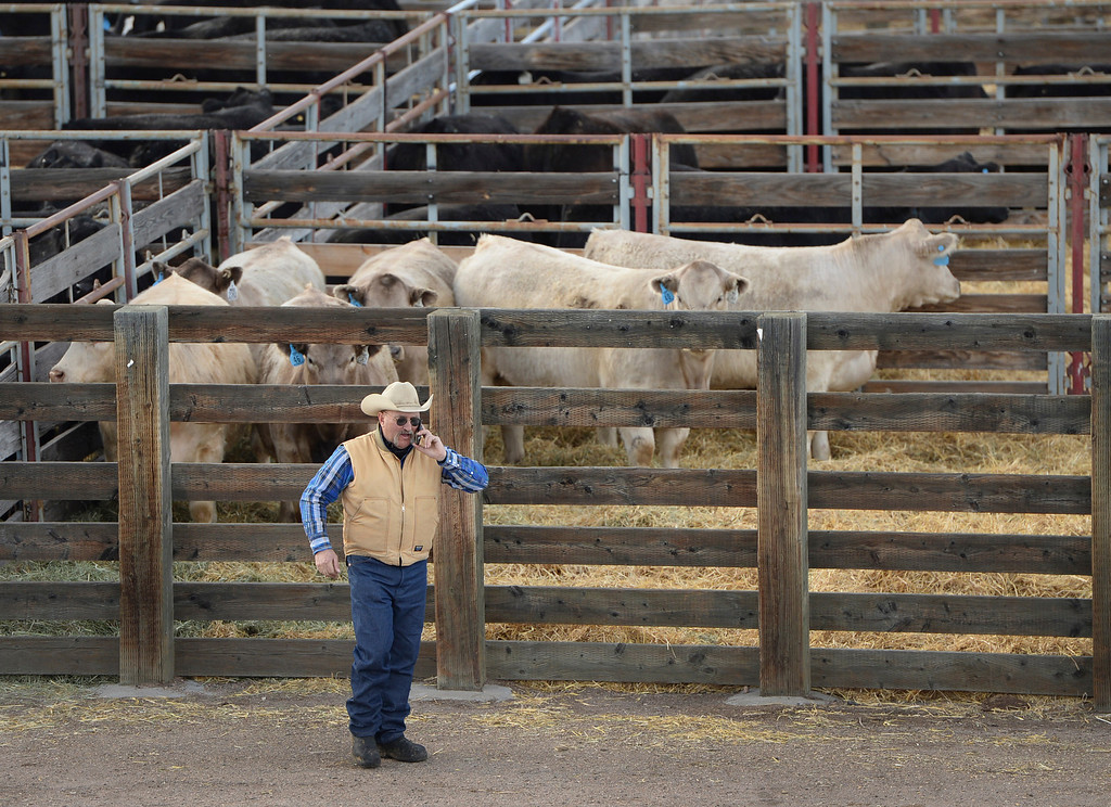 . DENVER, CO. - JANUARY 15: Jay Middleswarth of Torrington, Wyoming used his phone to deal with an emergency back home Wednesday afternoon, January 15, 2014.  He had a frozen water line in one of his pastures on his Wyoming ranch. Middleswarth brought Hereford bulls to the National Western Stock Show this week to be shown this Friday. Photo By Karl Gehring/The Denver Post
