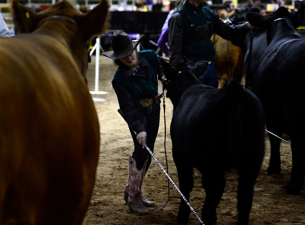 . DENVER, CO - JANUARY 13: Lily Jedd, 9, from Pomona, KS, shows her female Gelbvieh and wins the  award in her category for champion for senior Heifers. The National Gelbvieh and Balancer Show takes place inside the Stadium Arena at the National Western Stock Show in Denver on Monday, Jan. 13, 2014. (Photo by Kathryn Scott Osler/The Denver Post)