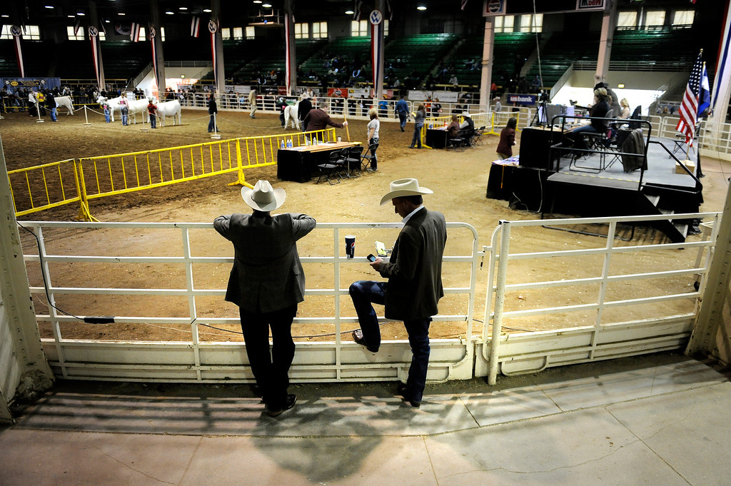 . Judges Mark McCully, left, and Dave Duello, watch the Maine-Anjou Breeding Heifers show during the National Western Stock Show on Jan. 19 at the Denver Coliseum, where they judge muscle, volume and weight capacity of the heifers. Photo by Jamie Cotten, Special to The Denver Post