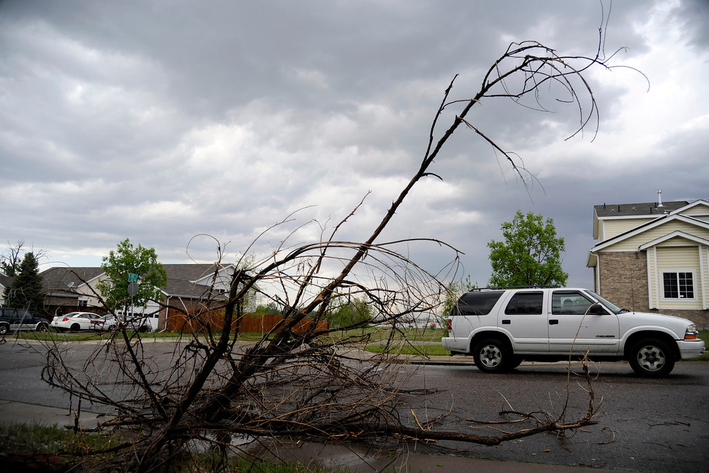 . AURORA, CO - MAY 21: An SUV drives by a downed tree after hail pounded the area near East 26th Avenue and East 26th Place. A hail storm hit the Denver metro area on Wednesday, May 21, 2014. (Photo by AAron Ontiveroz/The Denver Post)