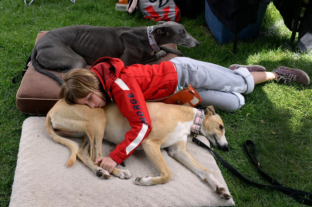 ". DENVER, CO - JUNE 8: Anya Donohue, 11, rests alongside ""Jumper\"" and \""Mackey\"" (top), two rescued Greyhound dogs bringing attention to the non-profit, Colorado Greyhound Adoption. The Annual CHUN Capitol Hill People\'s Fair takes place at Civic Center Park in downtown Denver. The fair emphasizes \""bringing together a diverse population to celebrate community and enjoy the start of the summer festival season\"". The fair includes live entertainment with vendors selling food, arts and crafts, kids activities as well as numerous non-profits representing various organizations. The event runs through Sunday, 10 am to 7 pm. (Photo by Kathryn Scott Osler/The Denver Post)"