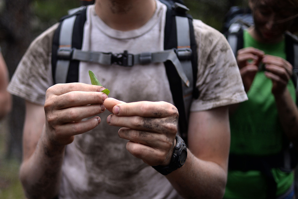 . WARD, CO - JUNE 10: Taylor Bond and fellow students feel leafs from a plant as they learn how to determine whether they were edible. Bear Grylls survival school at Glacier View Ranch near Ward, Colorado on Tuesday, June 10, 2014. (Photo by AAron Ontiveroz/The Denver Post)