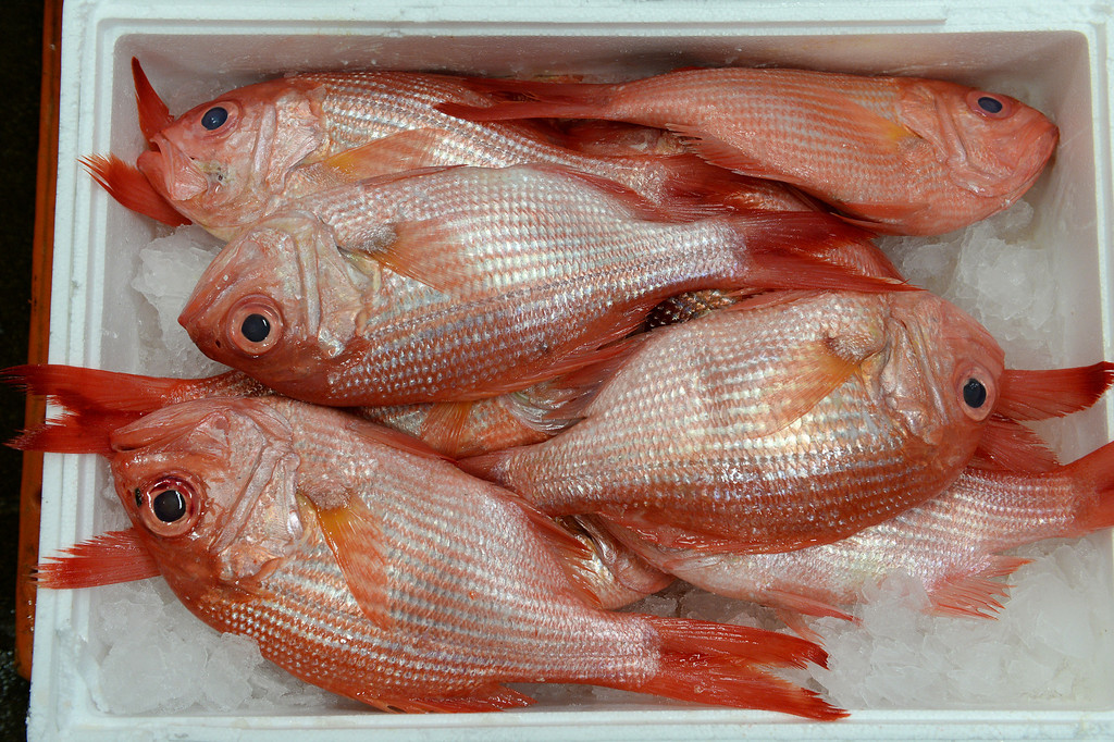 . Fresh and beautiful red snapper from New Zealand was just delivered this morning at Seattle Fish Company in Denver on April 17, 2014.  The company processed 10 million pounds of fish last year at their facility. (Photo By Helen H. Richardson/ The Denver Post)