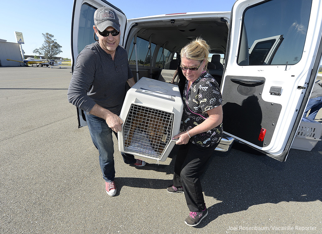 . Damian Cross with Wings of Rescue (left) and Aunie Winn, an animal care specialist with the Solano County Animal Shelter unload one of the nearly 30 dogs that were being housed at the Claybank Road shelter so that they can be loaded onto a waiting plane that will be flown by Cross from the Nut Tree Airport to a shelter in Montana.
