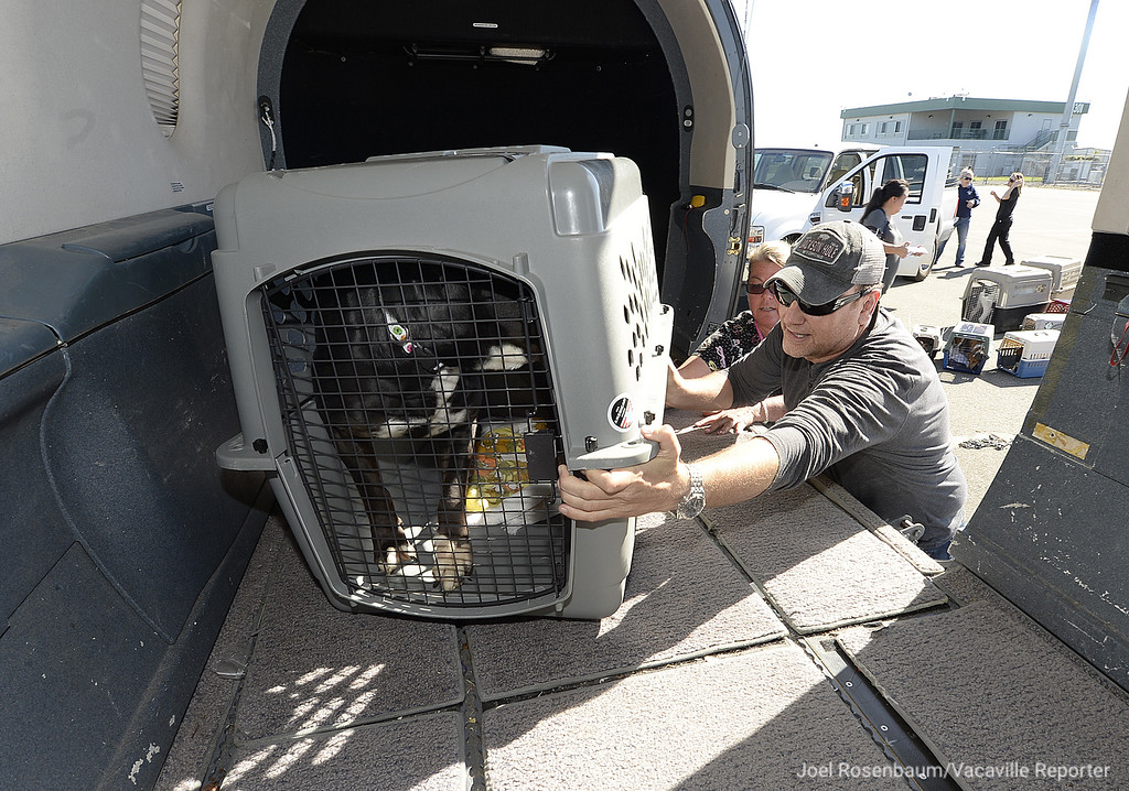 . With the help of Aunie Winn (left) of the Solano County Animal Shelter, Damian Cross chief pilot with Wings of Rescue load one of the nearly 40 dogs from both the Solano County Animal Shelter and a shelter in Turlock into a plane so that they can be flow to a shelter in Montana from Vacaville. Wings of Rescue, a non-profit based in Southern California partners with shelters to tranport endangered shelter animals either by overcrowding or other reasons to shelters with space available. Cross said that many of the animals they transport are adopted with two to three days of reaching their new shelters.