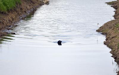 VAC-L-Vaca Sea Lion Goes Home-0316-011
