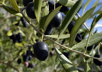 VAC-L-Il Fiorello Olive Oil Co-1020